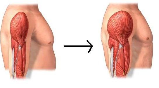 anabolicos para incrementar masa muscular