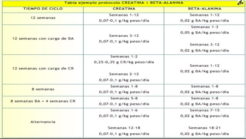 beta-alaninaprotocolo
