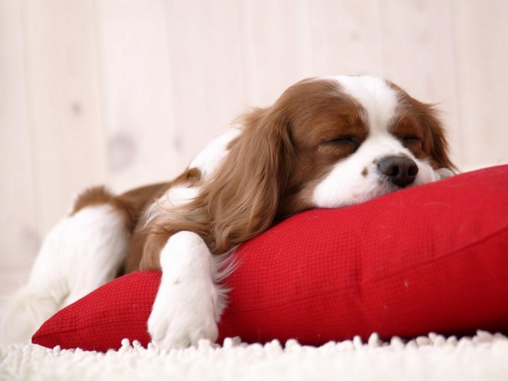 Dormir bien, sueño, fitness
