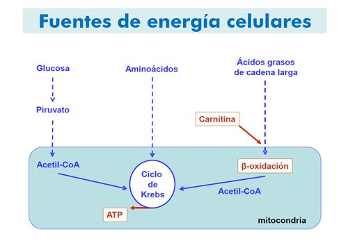 funcion de los carbohidratos lipidos y proteinas en el ser humano